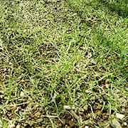 grass003.jpg
