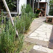 grass012.jpg